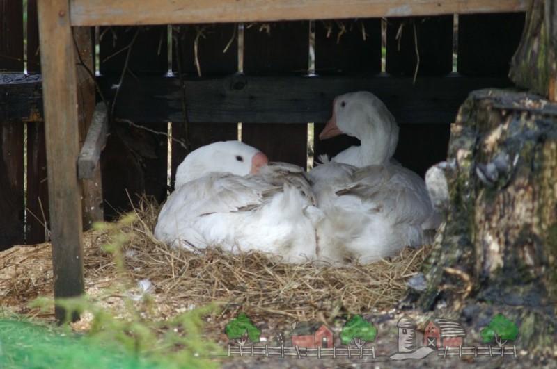 Фото птиц, которые сидят в гнезде