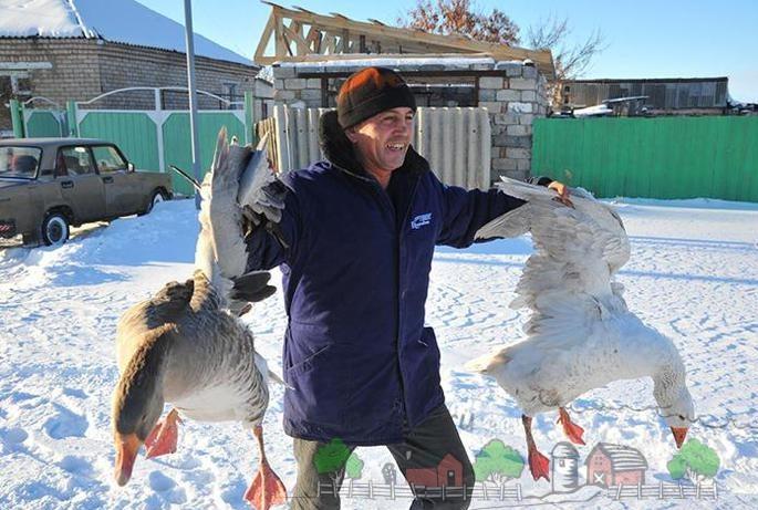 Фото мужчины, который несет гусей