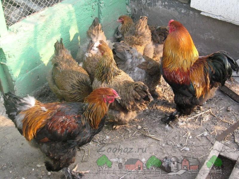 Птицы в загоне фото