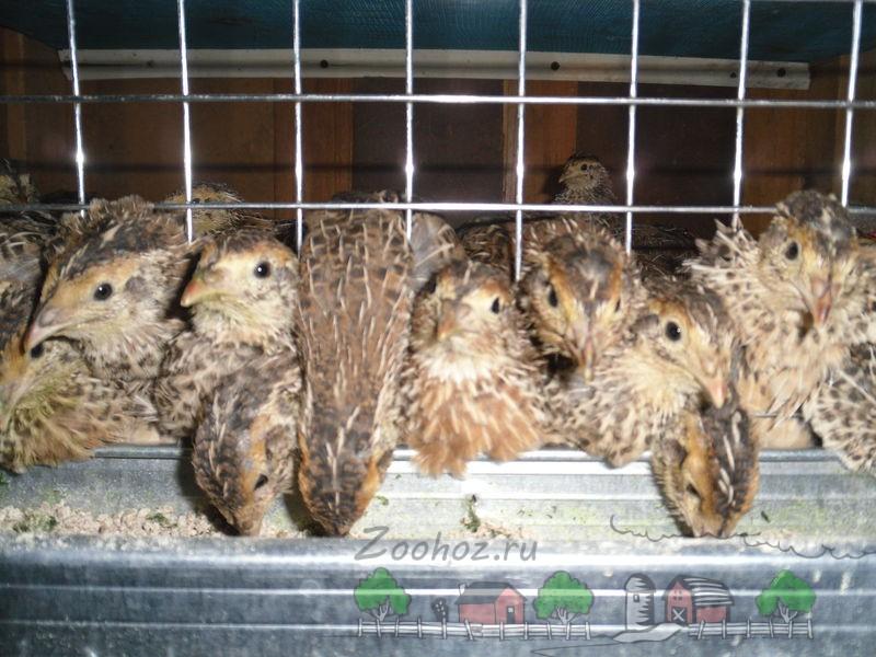 Фото птиц в клетке, которые кушают из кормушки