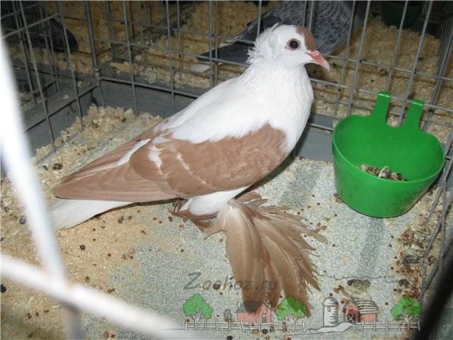 Фото птицы в клетке возле кормушки