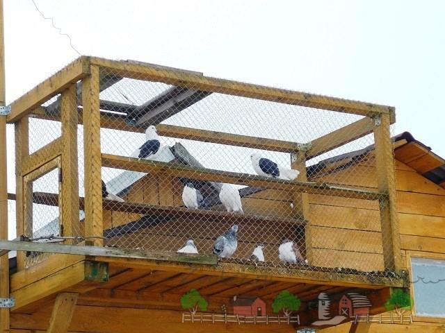 Фото голубей в вольере