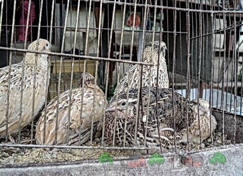 Фото домашних птиц в садке