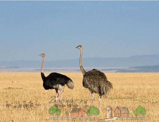 Фото жителей африканской пустыни