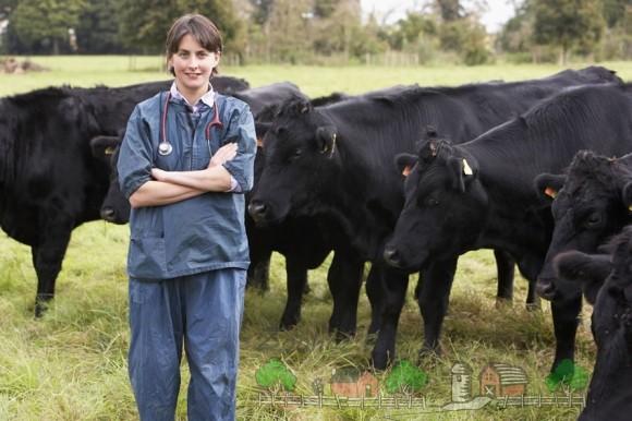 Бородавки на вымени у коров: причины и лечение болезни
