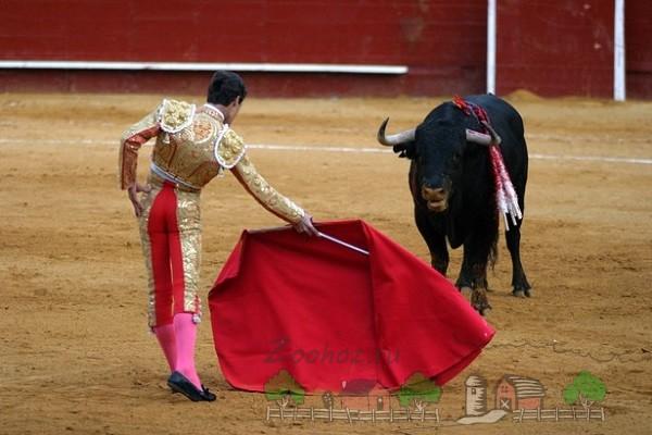 Размахивание красной тряпкой перед быком