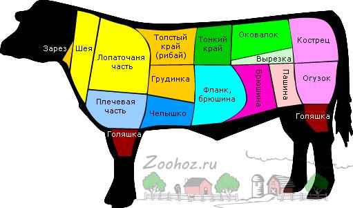 Схема частей туши коровы