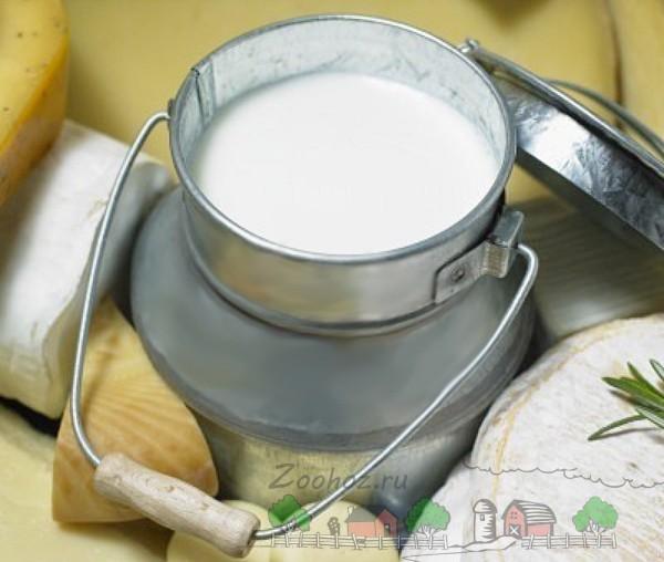 Свежее молоко в бидончике