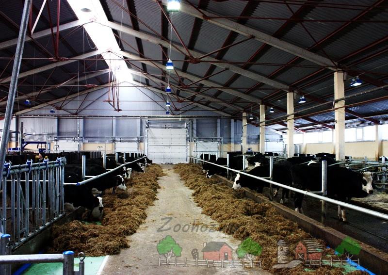 Животные на молочной ферме