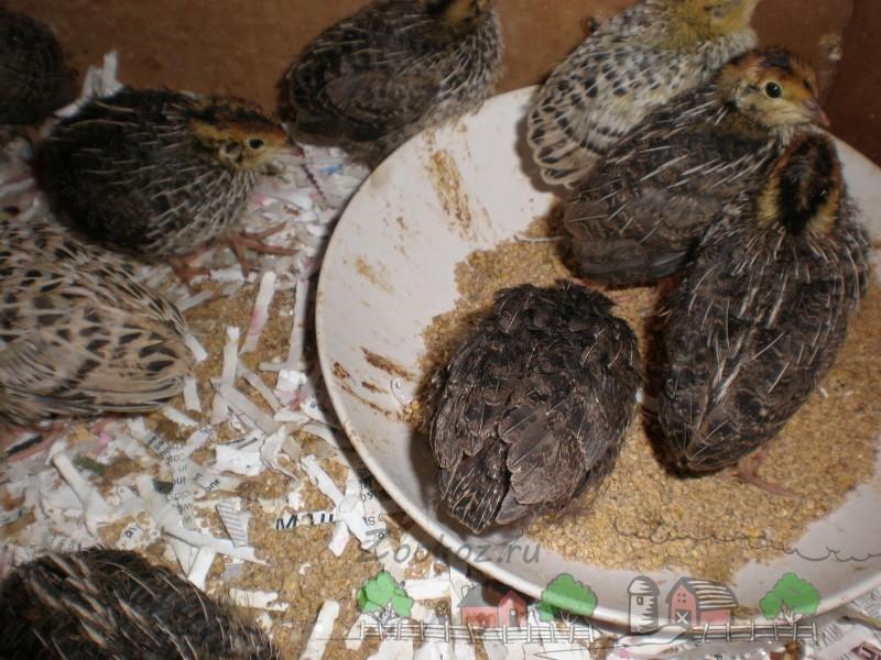 Маленькие птицы возле кормушки