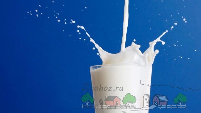 Коровье молоко в стакане