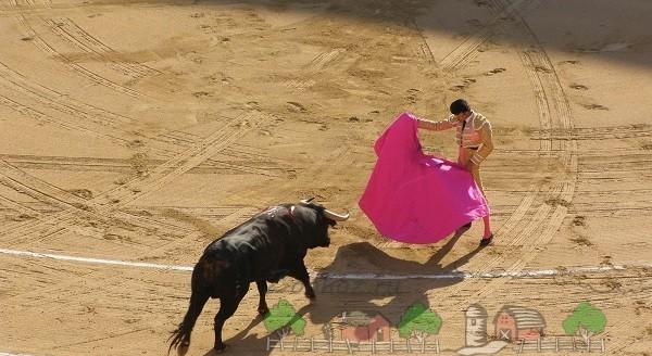 Первый этап битвы с быком