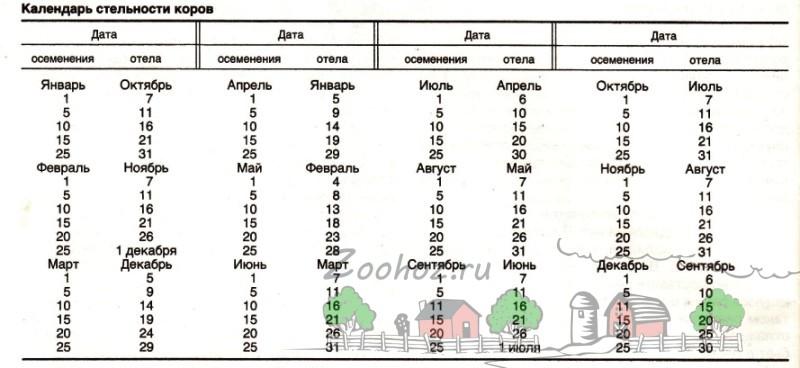 Календарь отела в таблице