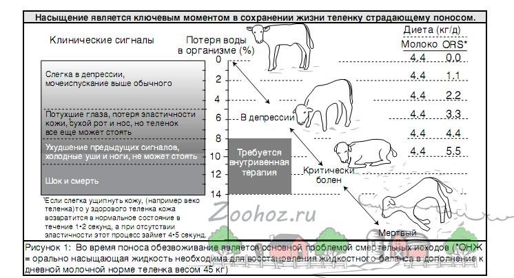 Таблица развития диареи