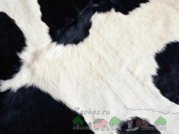 Структура шерсти чёрно-пёстрой коровы