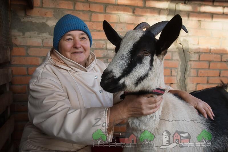 Хозяйка с дойной козой