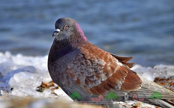 Красивый голубь на берегу моря