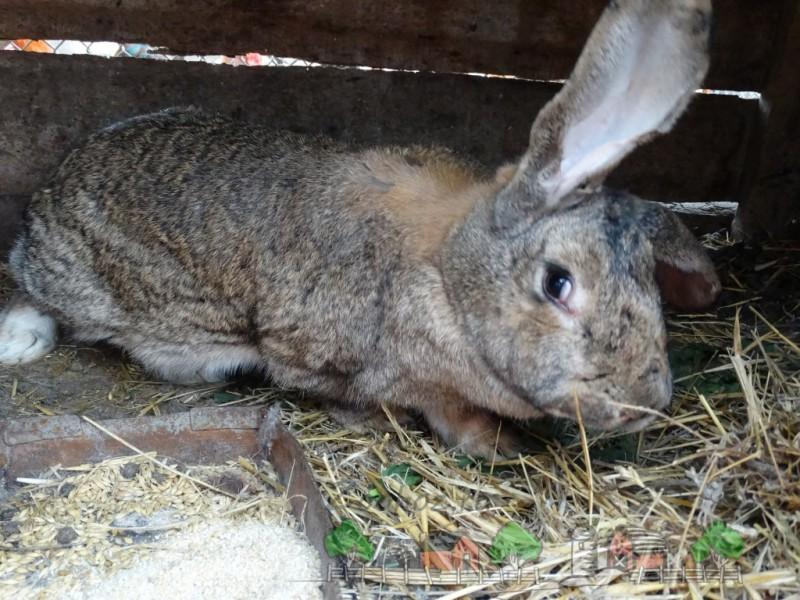 Большой братец кролик - Фермерский сайт