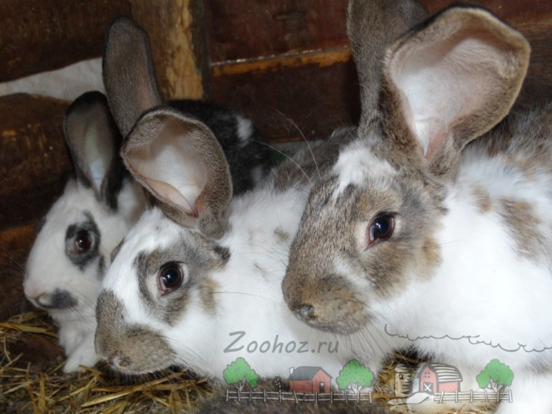 Кролики в ряд - Фермерский сайт