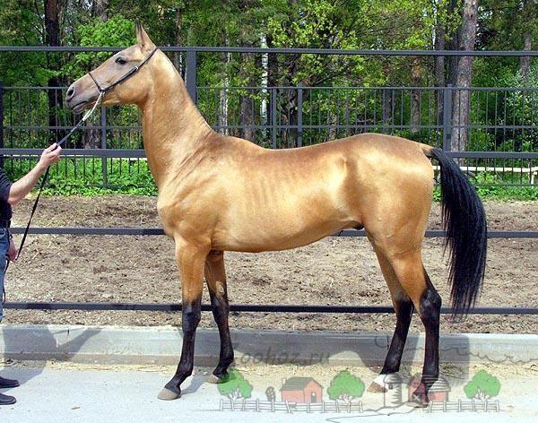 Красивая лошадка на выставке