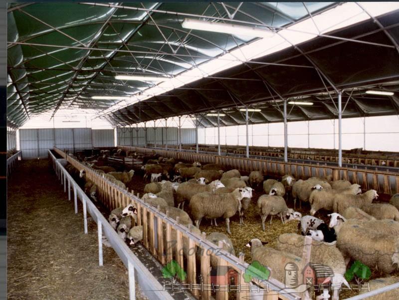 Масштабная промышленная овчарня