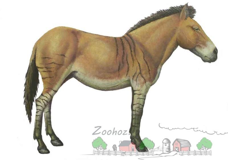 Эквус - последний предок современной лошади