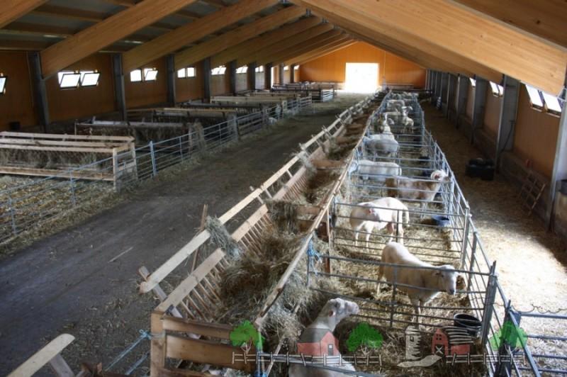 Большая овчарня на сотню овец