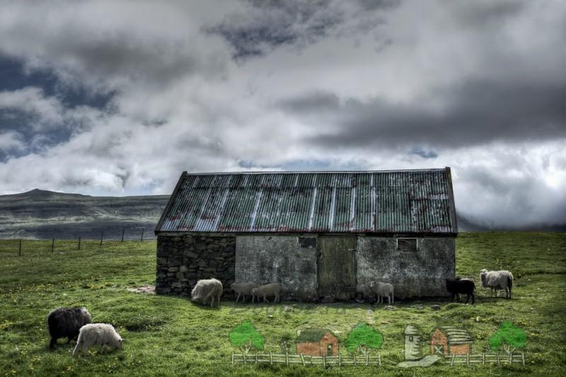 Альпийские овцы едят траву