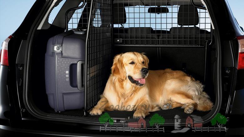 Транспортировка собаки в автомобиле