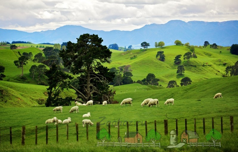 Пейзаж Новой Зеландии