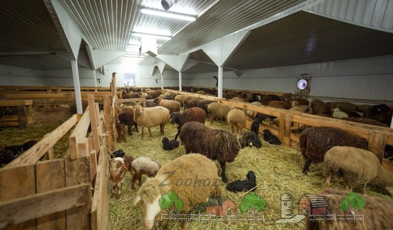 Фермерское помещение для овец
