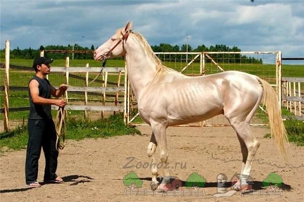 Заводчик вместе со своей лошадкой
