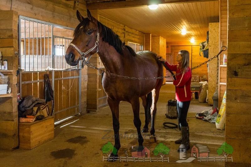 Девушка чистит своего коня