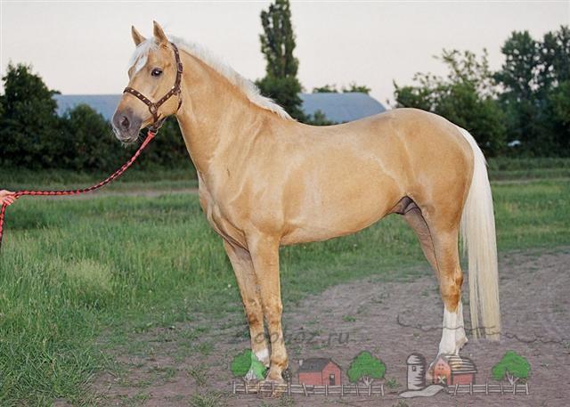 Конь с песочным отливом