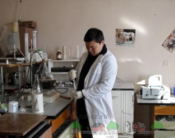 Разбавление спермы хряка на племзаводе