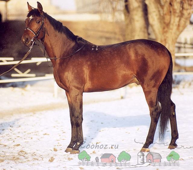 Обзор всех мастей лошадей, их описание и фото