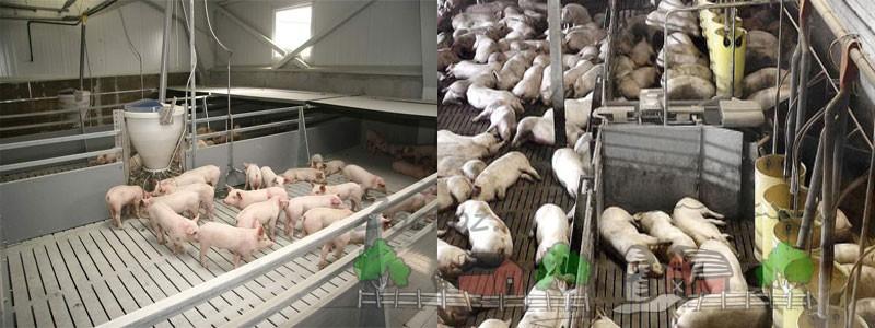 Свинарник на 10 голов своими руками: инструкция, фото и видео