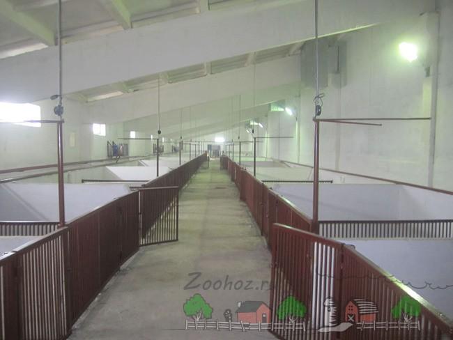 Свинарник со станками из железных конструкций