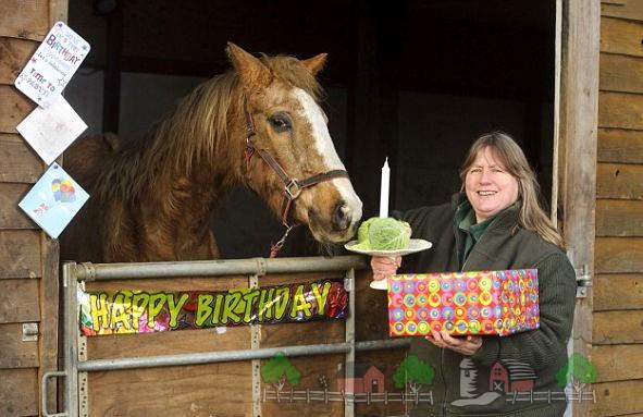 День Рождения у лошади