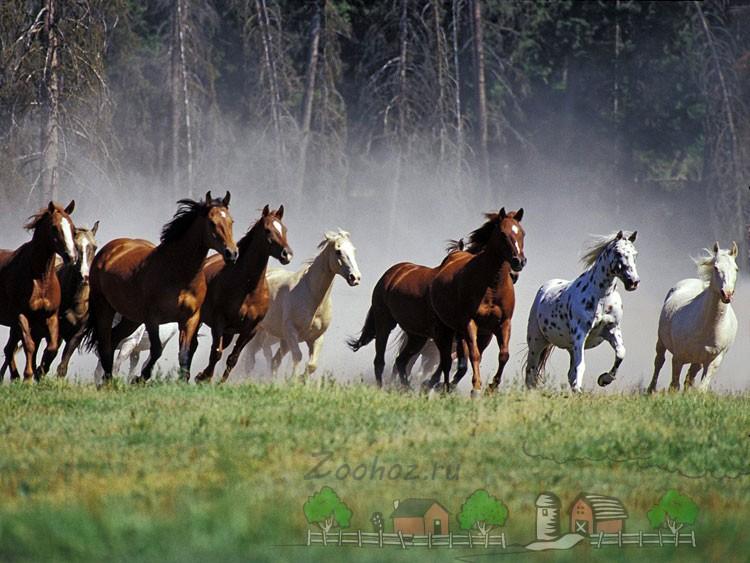 Группа диких лошадей
