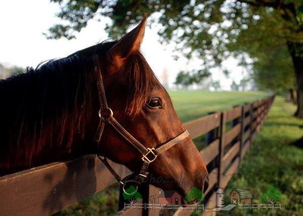Домашняя лошадь в загоне