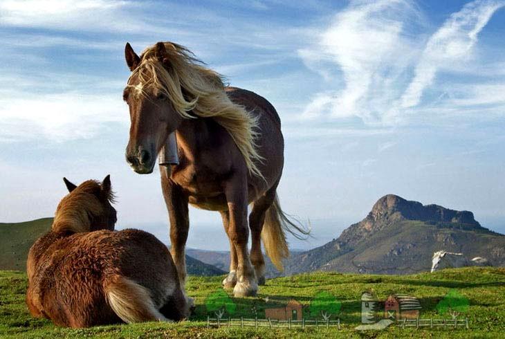 Рыжие кони дремлют на лугу