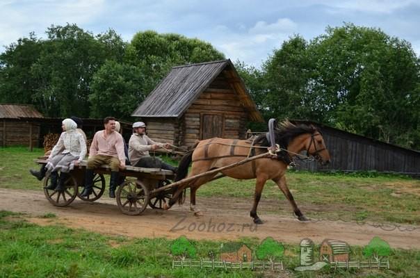 Лошадь в оглобельно-дуговой