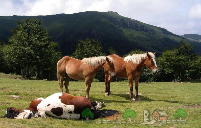 Кони на горном пастбище