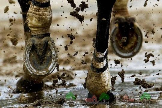 Подкованные ноги коня