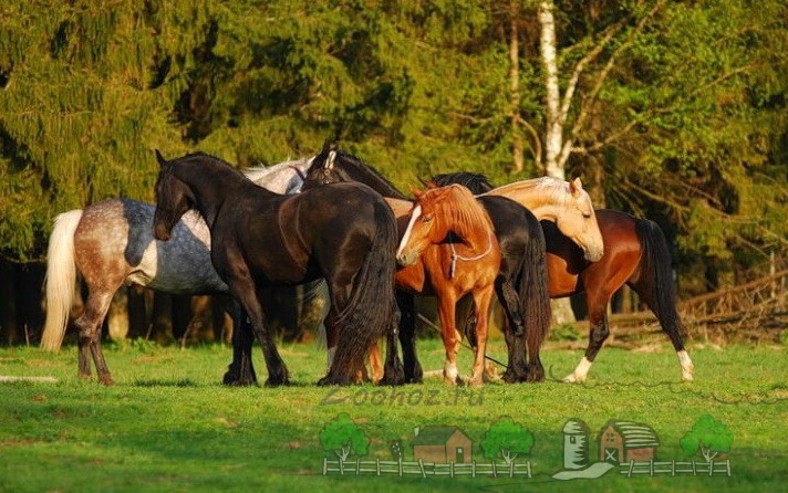 Ухаживание коней в табуне