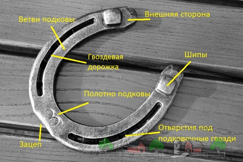 Схема строения стандартной подковы