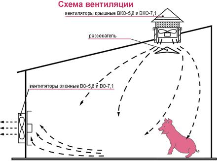 Схема вентиляции в свиноферме