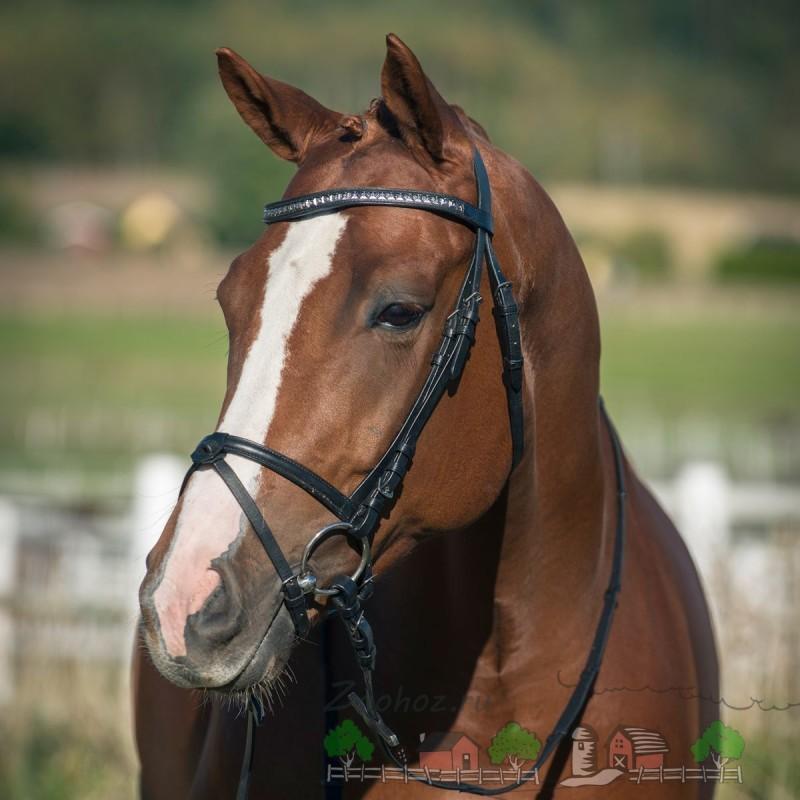 Голова лошади крупным планом