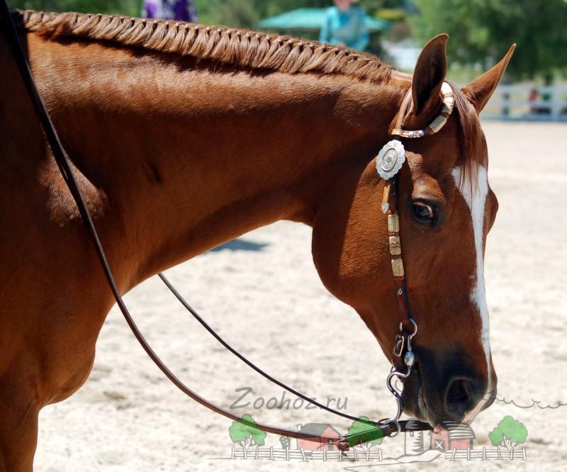 Вестерн-уздечка на коне